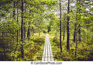 Wooden hiking trail in a pine forest