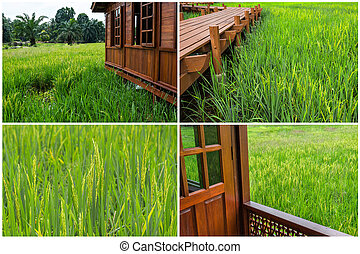 Wooden house at paddy field