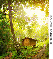 Wooden house in a tropical forest. Day and sunshine
