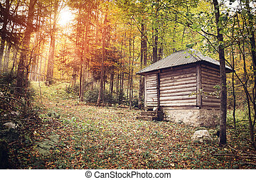 Wooden house in the forest, early autumn season