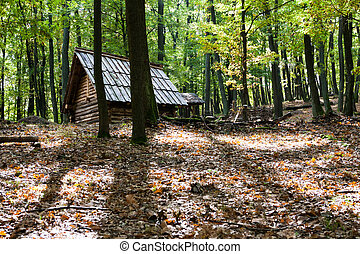 Wooden hut in a forest