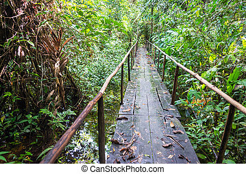 Wooden Jungle Bridge