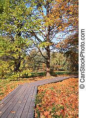 wooden lane in autumn park