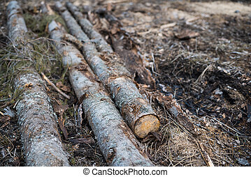 Wooden logs are cut and laid on the ground.