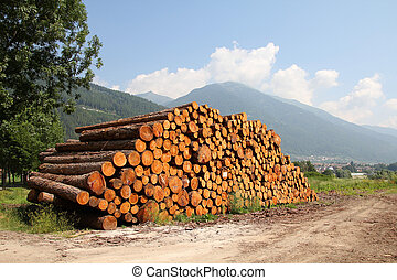 Wooden logs - Lumber in the mountains of Italy. Stacked wood...