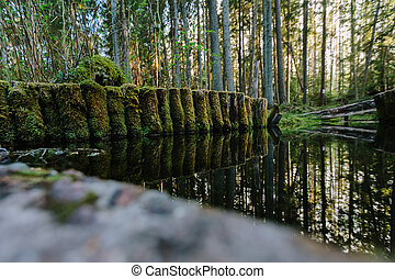 Wooden logs overgrown with green moss in the forest pond