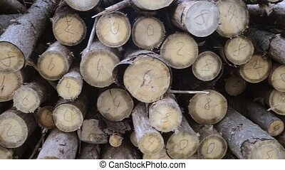 wooden logs sorting - many wood logs with numbers on cuts,...