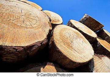 wooden logs under blue sky