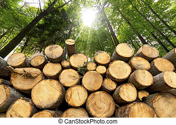 Wooden Logs with Forest on Background - Trunks of trees cut...