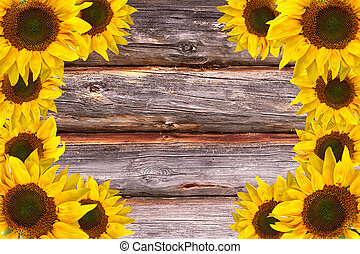 Wooden Lumber Textured Background with Sunflowers frame
