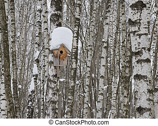 Wooden nesting box on birch tree trunk