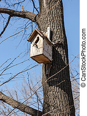 Wooden nesting box on the tree in spring
