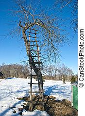 ladder and apple tree in winter garden