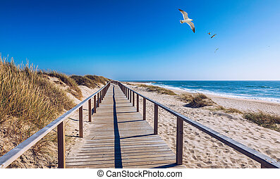 Wooden path at Costa Nova d'Aveiro, Portugal, over sand dunes with ocean view and seagulls flying over Praia da Barra. Wooden footbridge of Costa Nova beach in a sunny day. Aveiro, Portugal.