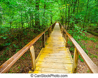 Wooden path in Bialowieza primeval forest