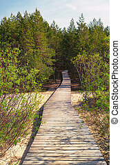 Wooden path leads through the dunes to the forest