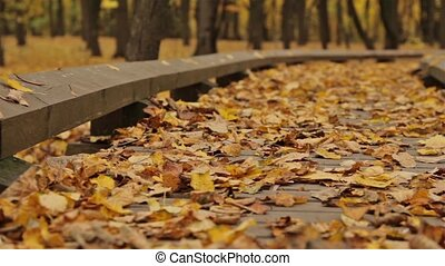 Wooden pathway in autumn park. Close up, dolly shot