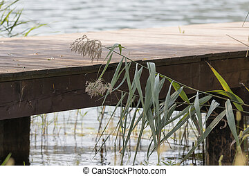wooden pier and wildflower on lake