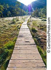wooden platform through the swamp