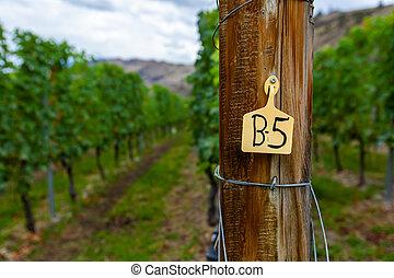 wooden post sign, vineyard vine grapes