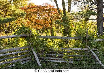 Wooden Posts Fence