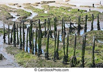 posts in creek