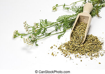 Fresh and dried yarrow with a wooden shovel