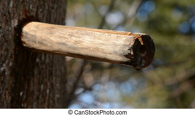 wooden spigot with maple sap drops