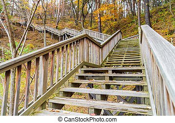Wooden staircase in park