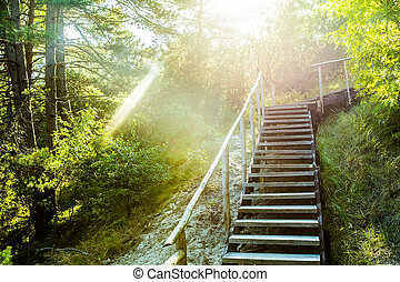 staircase with railing in the national Park