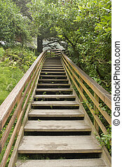 Wooden Stairs at Hiking Trail Vertical
