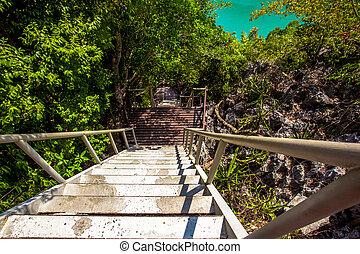 Wooden Stairs near green lagoon