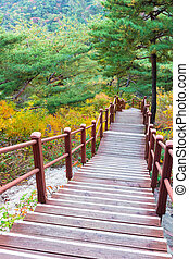 Wooden steps in forest