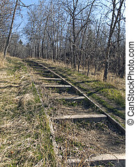 Wooden  Steps Through Forest