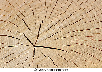 wooden structure of a tree trunk