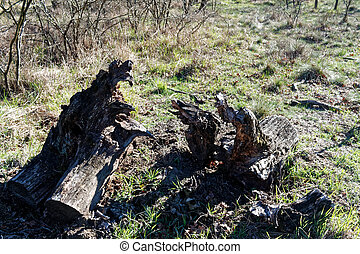 Wooden stump in spring forest, good for meditation and mind cleaning