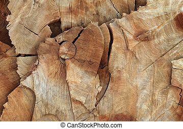 Wooden texture cut of tree trunk
