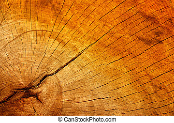Wooden texture of a cracked tree trunk
