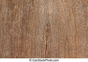 wooden texture of a tree