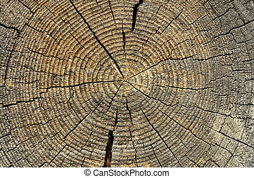 Wooden texture of a tree trunk, Background texture.