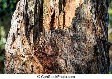 Wooden texture of old tree trunk
