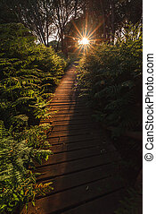 Wooden trail to the sunset among ferns