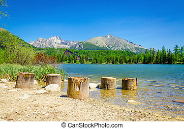 Wooden trunks at beach of mountain lake