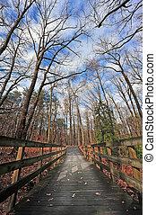 Wooden walking bridge in the woods during Autumn