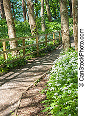 wooden walking path in a green park in spring