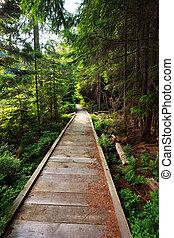 Wooden walkway in a beautiful fir forest