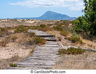 Wooden walkway in dunes