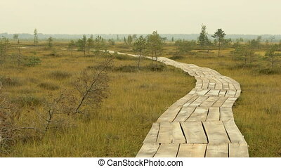 Wooden walkway in the national wildlife reserve. Autumn daytime