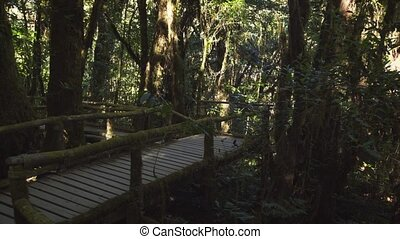 Wooden walkway in the rain forest. Chiang Mai, Thailand. 4k ...