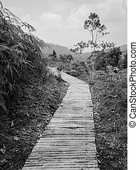 Wooden walkway through a forest
